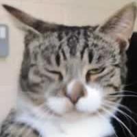 adoption-cats